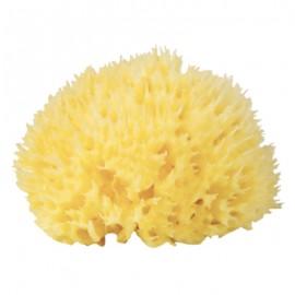 Burete natural de mare Honeycomb nr.10